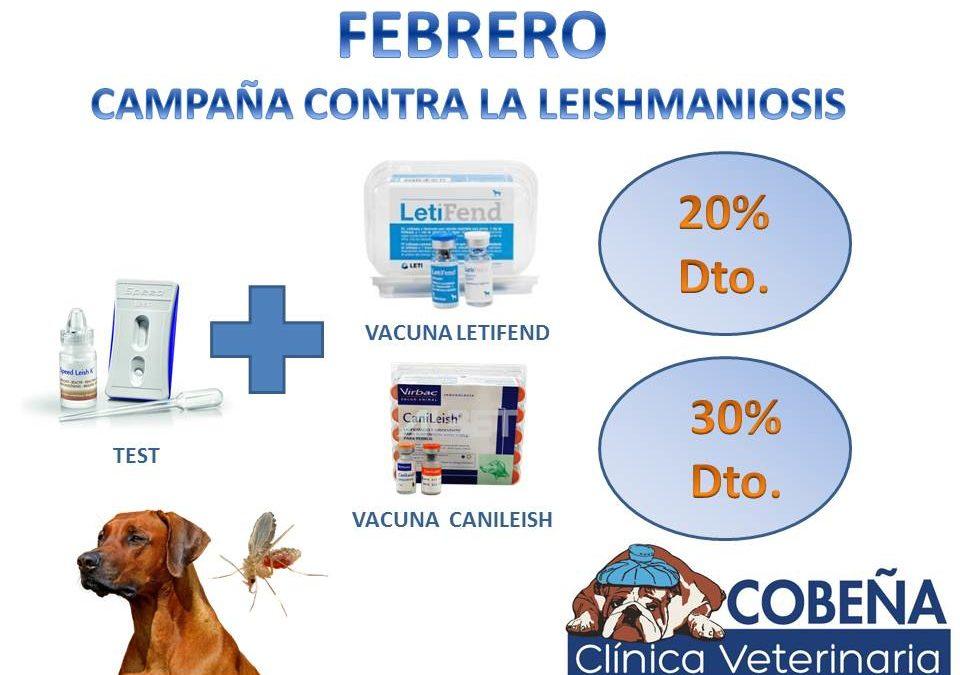 Campaña de Prevención contra la Leishmaniosis
